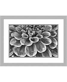 Silver Dahlia Framed Art Print