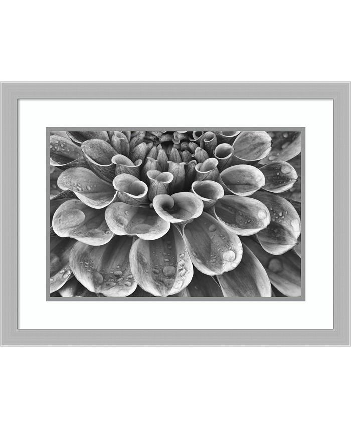 Amanti Art - Silver Dahlia 25x19 Framed Art Print
