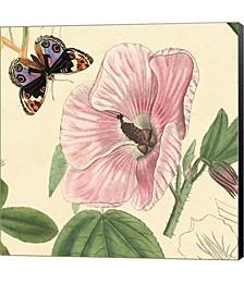 Hibiscus by Louis Van Houtte Canvas Art