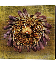 Sea Urchin 2 by John W. Golden Canvas Art