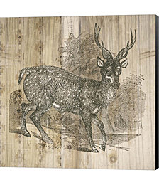 Natural History Lodge III by Wild Apple Portfolio Canvas Art
