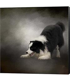 Ready To Play Border Collie by Jai Johnson Canvas Art