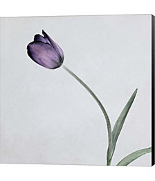 Tulip II by Symposium Design Canvas Art