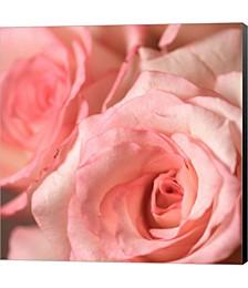 Pink Rose 2 by PhotoINC Studio Canvas Art