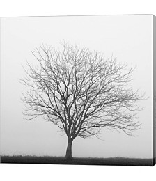 Winter Trio II by Nicholas Bell Photography Canvas Art