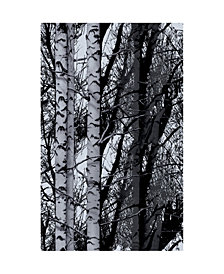 Birch Forest Premium Window Film
