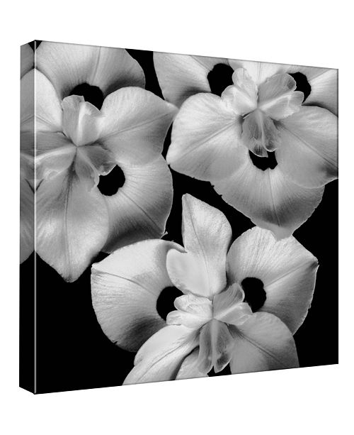 PTM Images Nature Ii Decorative Canvas Wall Art