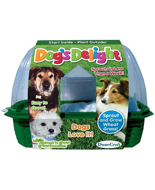 DuneCraft Dogs Delight Plant Kit