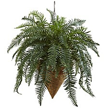 "33"" Giant River Fern w/ Cone Hanging Basket"