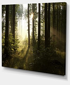 "Designart Early Morning Sun In Misty Forest Photography Canvas Print - 40"" X 30"""