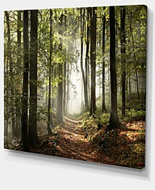 "Designart Green Fall Forest With Sun Rays Photography Canvas Print - 40"" X 30"""