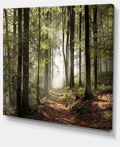 "Design Art Designart Green Fall Forest With Sun Rays Photography Canvas Print - 40"" X 30"""