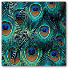 "Peacock Gallery-Wrapped Canvas Wall Art - 16"" x 16"""