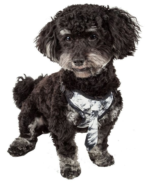 Pet Life Central Pet Life 'Bonatied' Reversible and Adjustable Dog Harness with Neck Tie