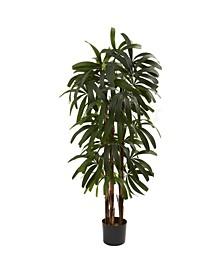 4' Raphis Palm Tree