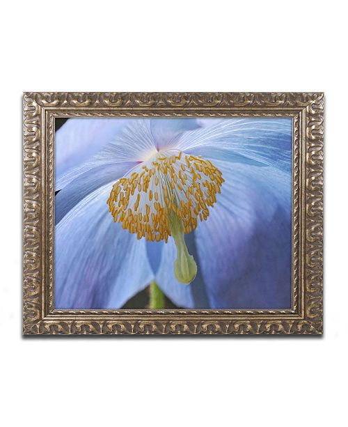 "Trademark Global Cora Niele 'Blue Poppy' Ornate Framed Art - 14"" x 11"" x 0.5"""