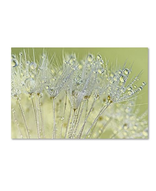 "Trademark Global Cora Niele 'Dandelion Dew I' Canvas Art - 32"" x 22"" x 2"""