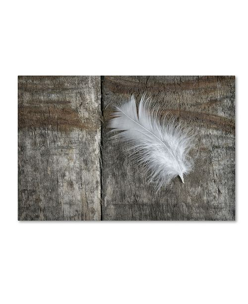 "Trademark Global Cora Niele 'Feather on Wood II' Canvas Art - 32"" x 22"" x 2"""