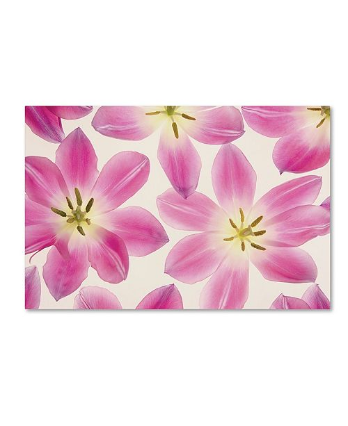 "Trademark Global Cora Niele 'Cerise Pink Tulips' Canvas Art - 32"" x 22"" x 2"""
