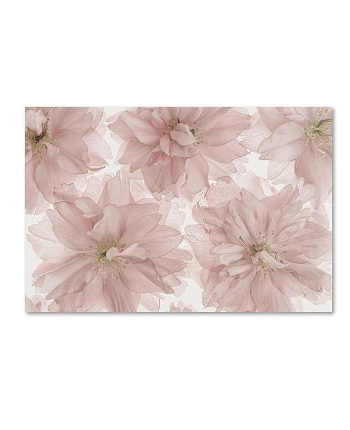 "Trademark Global Cora Niele 'Prunus Blossom' Canvas Art - 47"" x 30"" x 2"""