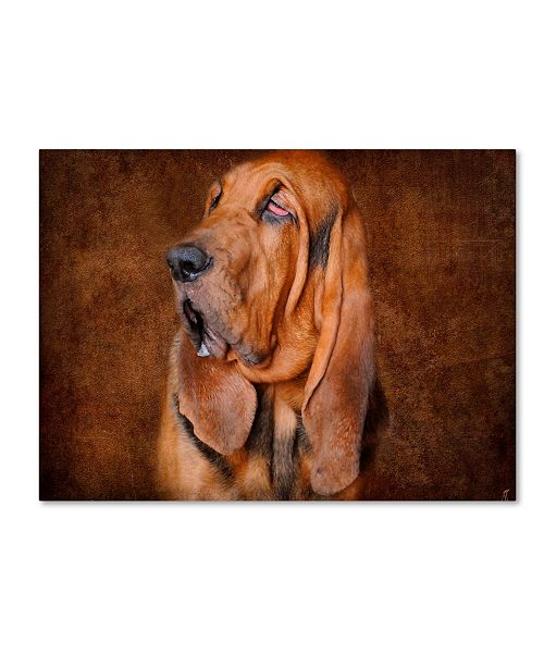 "Trademark Global Jai Johnson 'Bloodhound Portrait' Canvas Art - 47"" x 35"" x 2"""