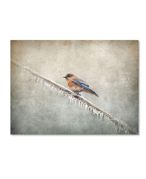 "Trademark Global Jai Johnson 'Bluebird Braving The Cold' Canvas Art - 32"" x 24"" x 2"""