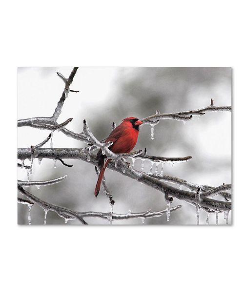 "Trademark Global Jai Johnson 'Male Cardinal Braving The Cold' Canvas Art - 19"" x 14"" x 2"""