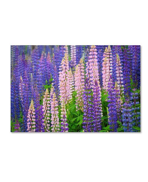 "Trademark Global Cora Niele 'Lupine Flowers' Canvas Art - 24"" x 16"" x 2"""