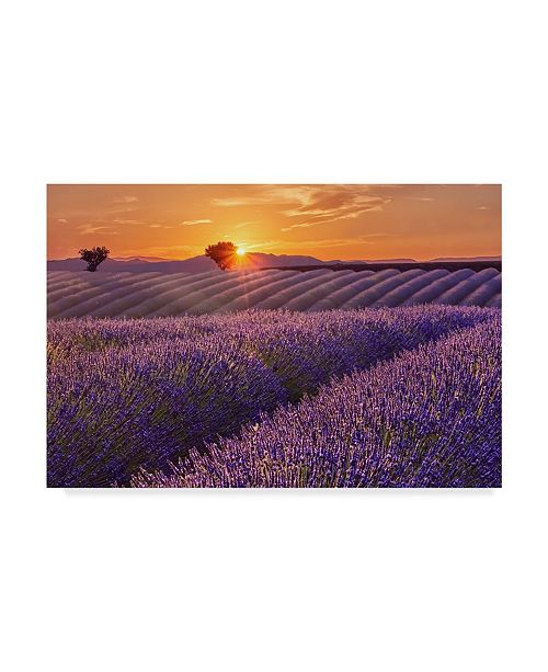 "Trademark Global Cora Niele 'Lavender Field At Sunset' Canvas Art - 47"" x 30"" x 2"""