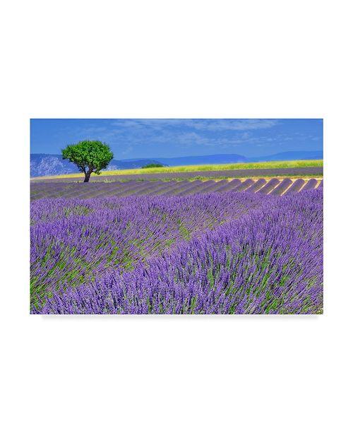 "Trademark Global Cora Niele 'Lavender Fields With Tree' Canvas Art - 19"" x 12"" x 2"""