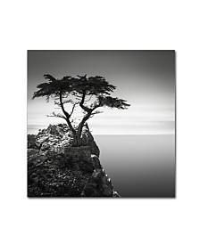 "Dave MacVicar 'The Lone Cypress' Canvas Art - 18"" x 18"" x 2"""