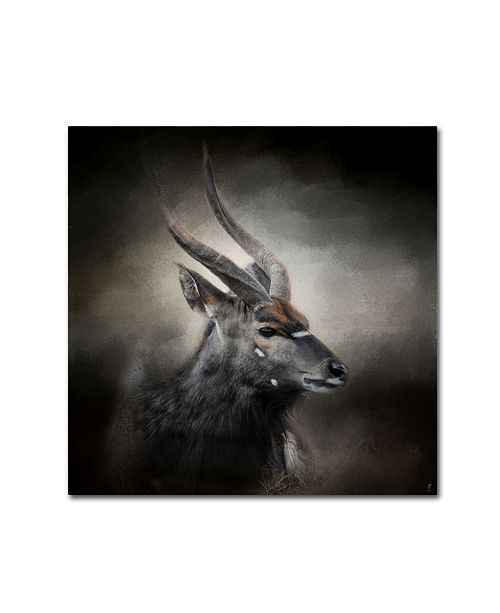 "Trademark Global Jai Johnson 'Waiting For The Storm Nyala Buck' Canvas Art - 14"" x 14"" x 2"""