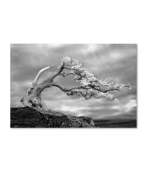 "Trademark Global Mike Jones Photo 'Bonzai' Canvas Art - 47"" x 30"" x 2"""