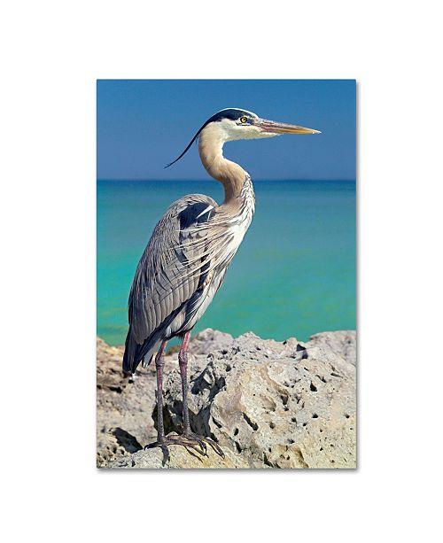 "Trademark Global Mike Jones Photo 'Blue Heron' Canvas Art - 19"" x 12"" x 2"""