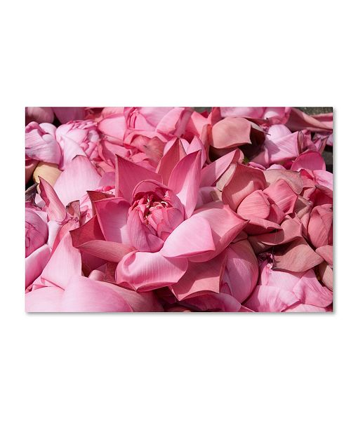 "Trademark Global Robert Harding Picture Library 'Pink Lotus' Canvas Art - 24"" x 16"" x 2"""