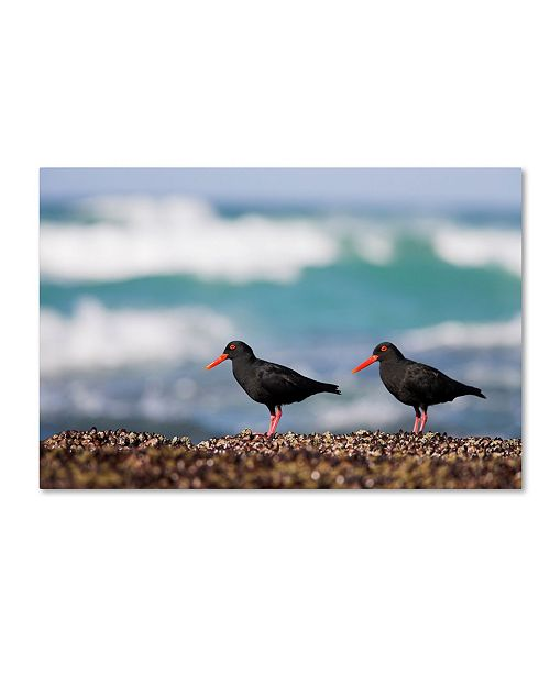 "Trademark Global Robert Harding Picture Library 'Black Birds' Canvas Art - 19"" x 12"" x 2"""