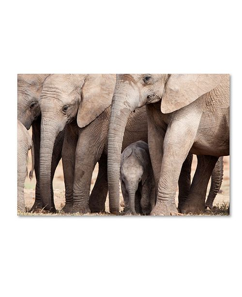 "Trademark Global Robert Harding Picture Library 'Elephants In Desert' Canvas Art - 19"" x 12"" x 2"""
