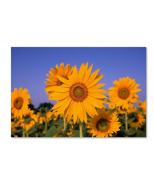 """Trademark Global Robert Harding Picture Library 'Yellow Flowers 2' Canvas Art - 19"""" x 12"""" x 2"""""""