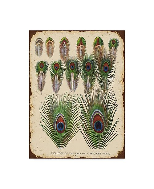 "Trademark Global Jean Plout 'Vintage Feather Study Peacock' Canvas Art - 24"" x 18"" x 2"""