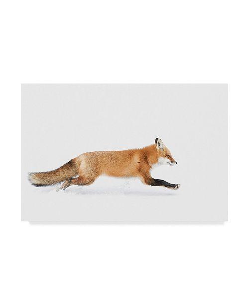 "Trademark Global Jim Cumming 'Red Fox In Algonquin Park' Canvas Art - 47"" x 2"" x 30"""