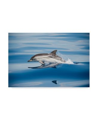 Mirko Ugo 'Striped Dolphin' Canvas Art - 32