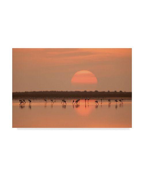 "Trademark Global Joan Gil Raga 'Flamingos At Sunrise' Canvas Art - 47"" x 30"" x 2"""