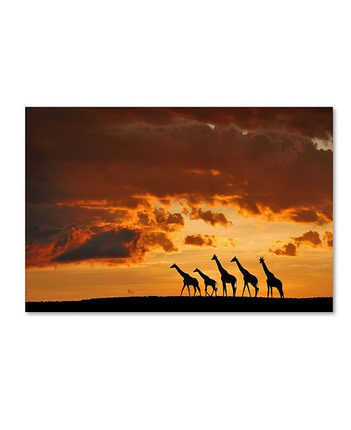 "Trademark Global Muriel Vekemans 'Five Giraffes' Canvas Art - 47"" x 30"" x 2"""