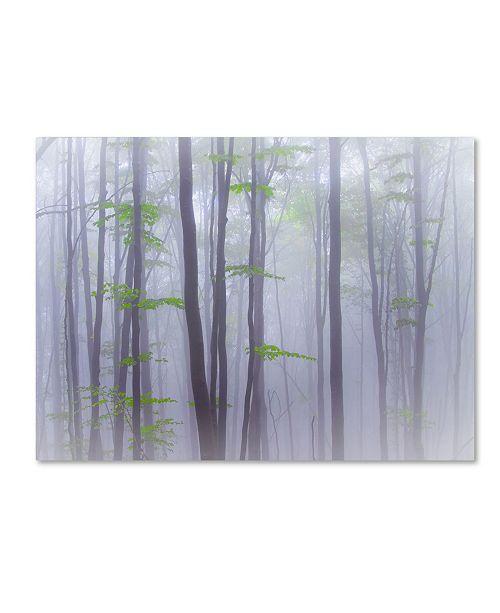 "Trademark Global Michel Manzoni 'Misty' Canvas Art - 32"" x 24"" x 2"""
