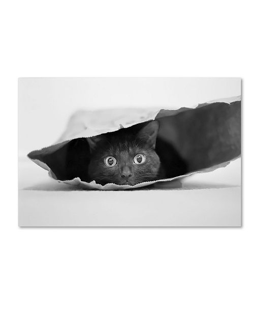 "Trademark Global Jeremy Holthuysen 'Cat In A Bag' Canvas Art - 47"" x 30"" x 2"""