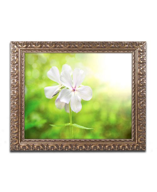 """Trademark Global PIPA Fine Art 'Beauty of the Forest Floor' Ornate Framed Art - 11"""" x 14"""""""