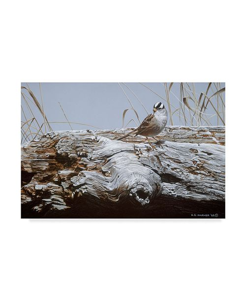 "Trademark Global Ron Parker 'White Crowned Sparrow' Canvas Art - 16"" x 24"""