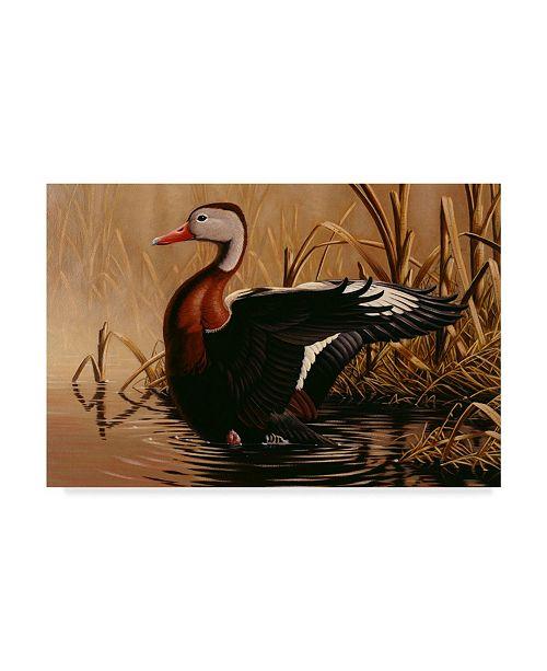 "Trademark Global Wilhelm Goebel '1988 Black Bellied Duck' Canvas Art - 16"" x 24"""