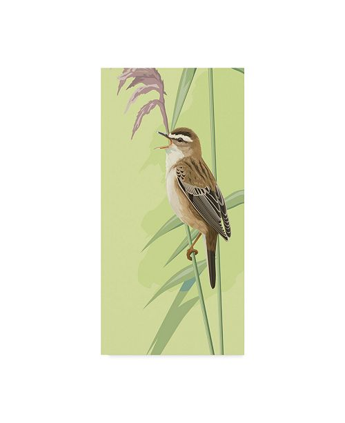 "Trademark Global Mike Hughes 'Singing Sedge Warbler' Canvas Art - 16"" x 32"""