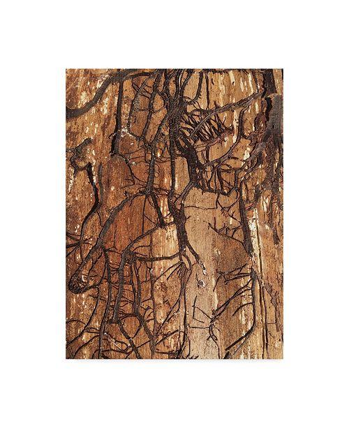"""Trademark Global Nina Marie 'Firewood 1' Canvas Art - 14"""" x 19"""""""